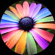Grow_flowers